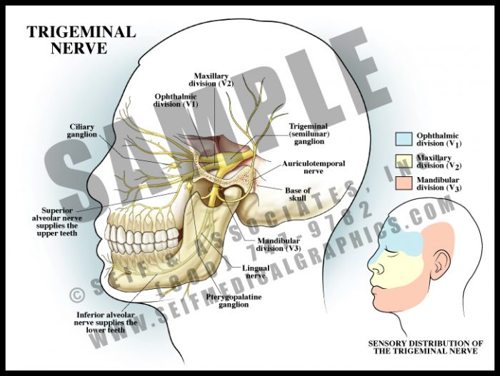 Medical Illustration of Trigeminal Nerve