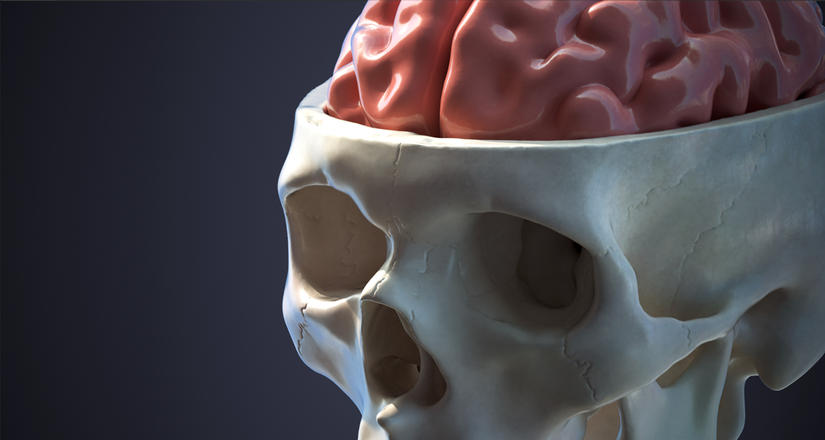 Medical 3D Render Skull Brain Digital Model