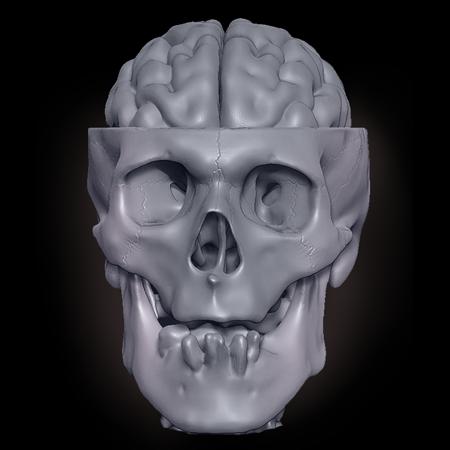 Digital 3D Model Reconstruction Skull Brain